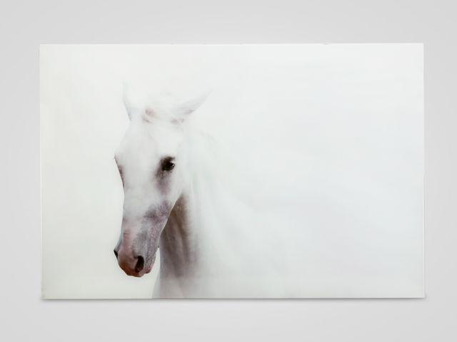 Настенный декор «Белая лошадь»